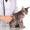 Ветеринарные клиники в Бижбуляке